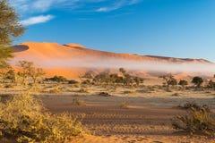 Namib pustynia, roadtrip w cudownym Namib Naukluft parku narodowym, podróży miejsce przeznaczenia w Namibia, Afryka Galonowa akac Obrazy Royalty Free