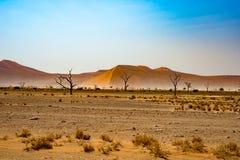 Namib pustynia, roadtrip w cudownym Namib Naukluft parku narodowym, podróży miejsce przeznaczenia w Namibia, Afryka Galonowa akac Fotografia Stock