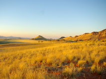 Southern african landscapes. Namib rand dunes and grass Royalty Free Stock Photography