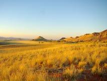 Den sydliga afrikanen landskap Royaltyfri Fotografi