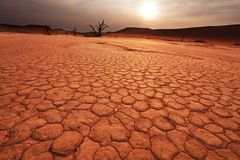 Namib on sunset Royalty Free Stock Photography