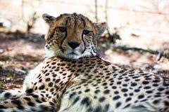 Namibië, Afrika Royalty-vrije Stock Afbeeldingen