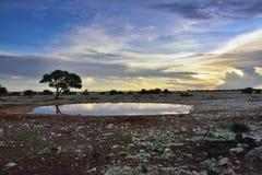 Namibië, Afrika, savanne bij nacht Stock Foto's