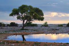 Namibië, Afrika, savanne bij nacht Royalty-vrije Stock Afbeeldingen