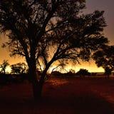 Namibië, Afrika, silhouet van boom Stock Afbeeldingen