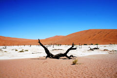 Namibië Dode Vley Stock Afbeelding