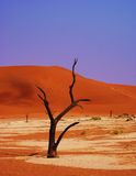 Namibië Sossusvlei. This picture was shot in the Sossusvlei in the Namibdesert in Namibia stock photography