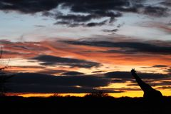 Namibia Zdjęcie Royalty Free