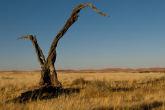 Namibia Royalty Free Stock Photography
