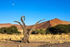Namibia Royaltyfria Foton
