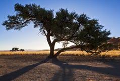 Namibia Royaltyfria Bilder