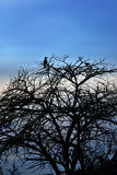 Namibia, Africa, silhouette Royalty Free Stock Image