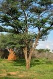Namibia, African bush savannah Stock Images