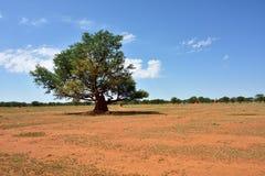 Namibia, afrykanina krajobraz Zdjęcie Stock