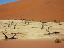 Namibia död Vlei dal med delvis döda träd royaltyfria bilder