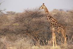 Namibia, Damaraland, lizenzfreies stockbild