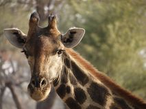 Namibia, Damaraland, parque de Etosha fotos de archivo