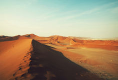 Namibia. Dead valley in Namibia Stock Images