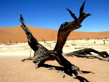 Namibia Dead Vlei Valley in heat with tree stump stock photography