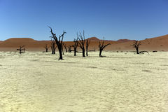 Namibia Deadvlei Stock Photos