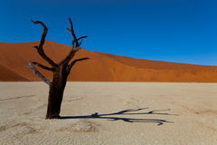 Namibia desert. In south africa Stock Images