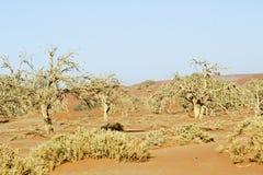 Namibia desert, Africa Royalty Free Stock Photos