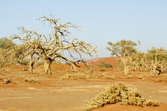 Namibia desert, Africa. Namibia, Namib desert in Africa royalty free stock image