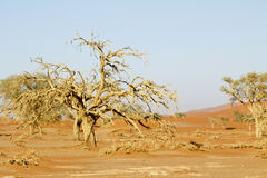 Namibia desert, Africa. Panoramic view Stock Image