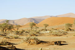 Namibia desert, Africa. Panoramic view Stock Photography