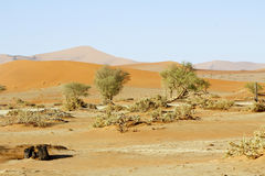 Namibia desert, Africa. Panoramic view Stock Photos