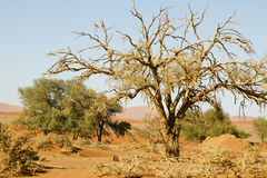 Namibia desert, Africa. Panoramic view Royalty Free Stock Images