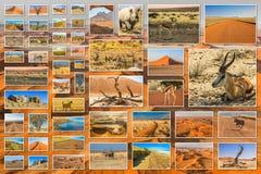 Namibia desert collage Royalty Free Stock Image
