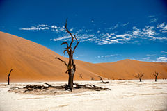 Namibia Desert, Deadvlei, Africa Royalty Free Stock Photo
