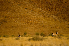 Namibia desert Royalty Free Stock Images