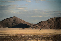Namibia desert landscape. At sunset stock photography