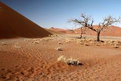 Namibia Dune Tree Stock Image