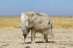 Namibia dust elephant Stock Image