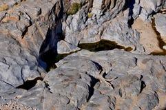 Namibia: En sällsynt waterhole i Kalaharien nära Rietoog Arkivbild
