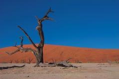 namibia för 3 dooie vlei Arkivbild
