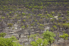 Namibia forest Stock Image