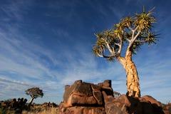 Namibia kołczanu krajobrazu afryce południowej drzewa Fotografia Stock