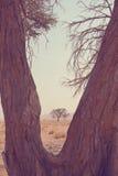 Namibia Stock Photos