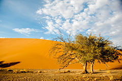 Namibia pustynia, Afryka Obraz Stock
