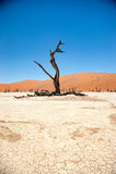 Namibia pustynia, Deadvlei, Afryka Fotografia Stock