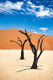 Namibia pustynia, Deadvlei, Afryka Obraz Royalty Free