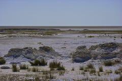 Namibia salta pannor Royaltyfri Fotografi