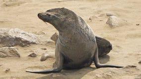 Namibia, Skeleton Coast Royalty Free Stock Photo