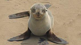 Namibia, Skeleton Küste lizenzfreie stockfotos