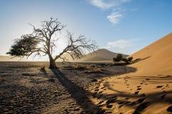 Namibia - Sossusvlei Royaltyfri Bild