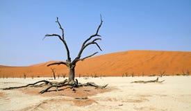 Namibia Sossusvlei, döda Vlei Arkivfoto
